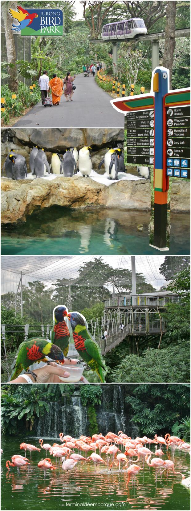 Jurong Bird Park Cingapura