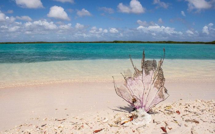 Praia de Areia Rosa - Pink Beach, Bonaire |  Foto: Tourism Corporation Bonaire