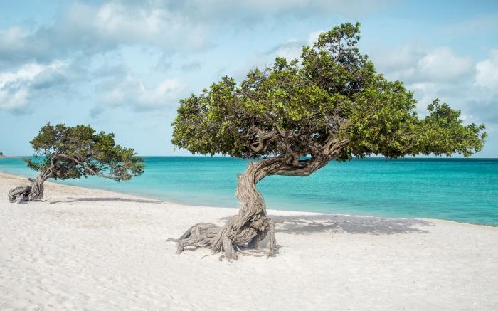 Voo Direto Brasil Caribe - Aruba (Foto Stock Photo)